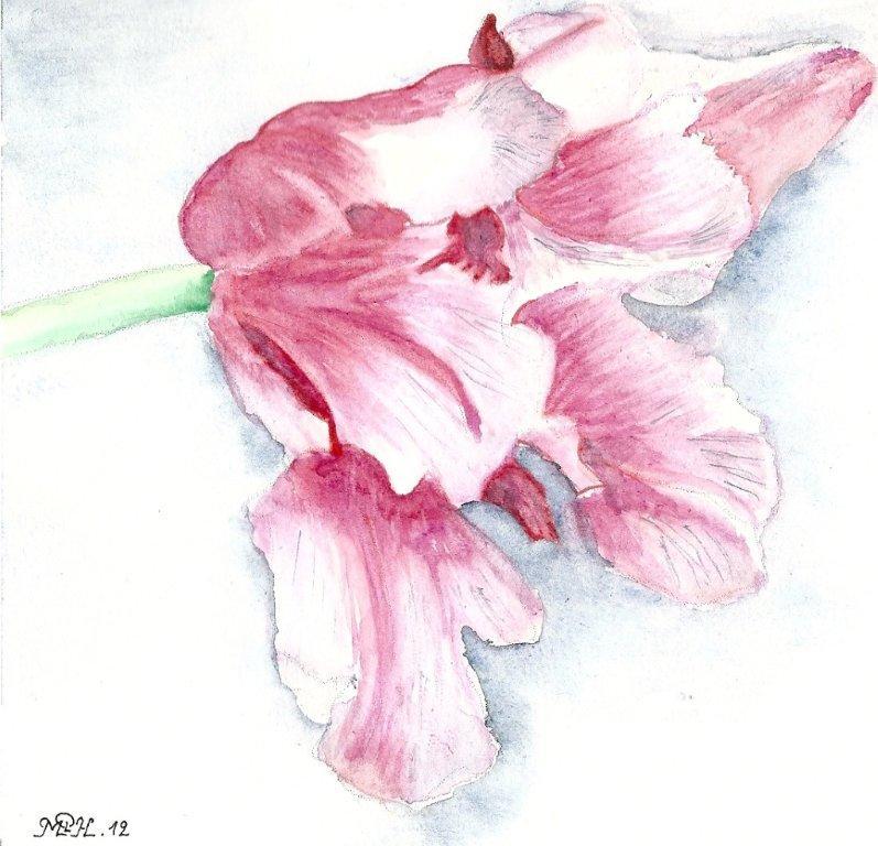 "Aquarelle n°10 - ""Tulipe panachée"""