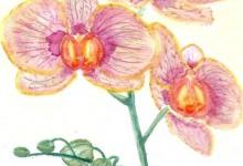 """Aquarelle n°9 - """"Orchidée"""""""