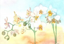 """Aquarelle n°40: """"Orchidées"""""""