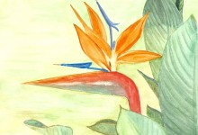 """Aquarelle n°41: """"Oiseaux de Paradis"""""""